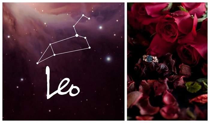 leo - roses